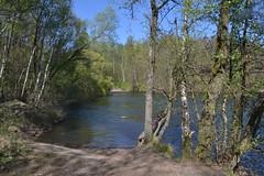 Am Heider Bergsee in Brühl (136FJAKA_3482)
