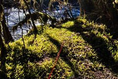 Moss getting toasty warm by the riverside after a cold night