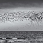 2nd - PDI League 5 - Brightom Murmuration by Richard White