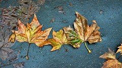 Leaves on Wet Pavement I