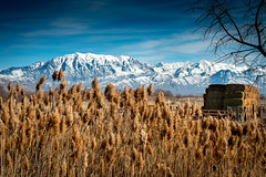 Marsh Grasses, Hay, and Mountains