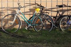 Good morning bicycles