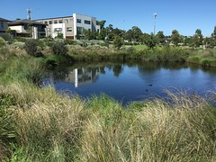Melbourne. Ascot Vale. Housing reflections in a lake with waterfowl.