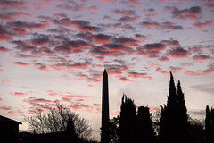 Pink Morning
