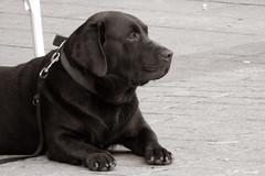014124 - Perro