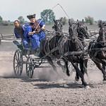 Stampeding Hungarian Horses by Rachel Dunsdon