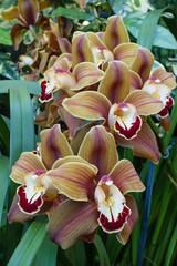 Floral Showhouse, Niagara Falls