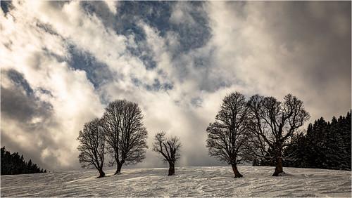 Winter light .