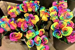 Rainbow Roses?