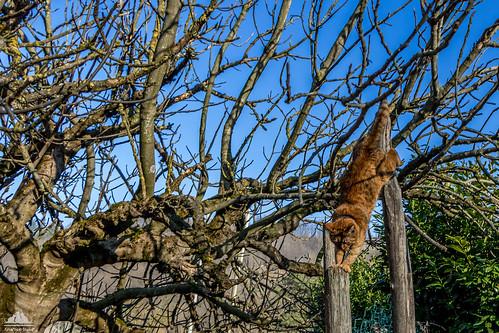Acrobatics On The Fig Tree ♠