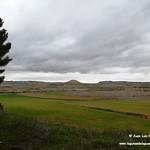 Aves en las lagunas de La Guardia (Toledo) 1-3-2020