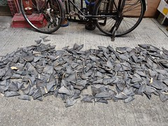SHARK FINS DRYING IN THE STREET OF MACAO 2019