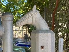 Horse Head Fence Posts 1950s Shenandoah