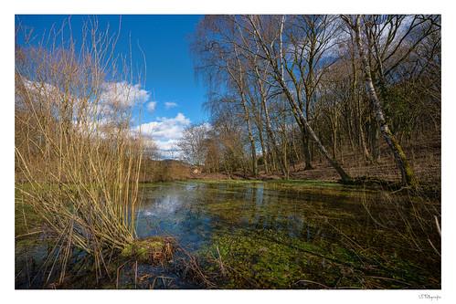 Kleiner Teich bei Dingsleben