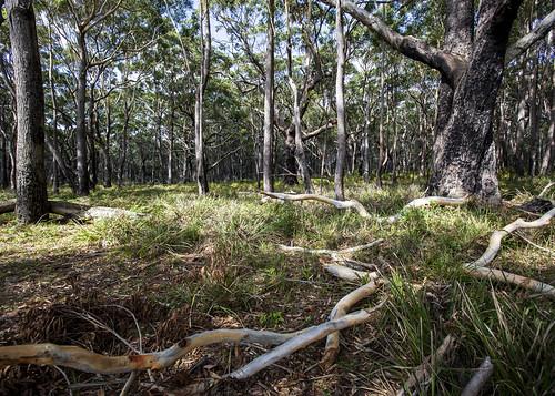 Booderee Woodlands