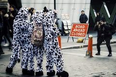 Human Cows