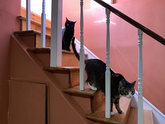 Cats on stairs
