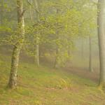 Springtime Woodland by Steve Baldwin