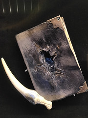Tom Riddle's diary and the basilisk's fang