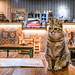 貓泰泰咖啡餐廳
