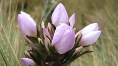Highlands Flora