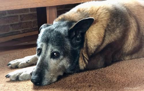 Thuiszorg hond Tasja