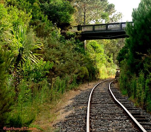 Bridge 29 Dargaville Branch