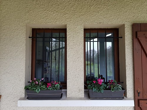 Fenêtres fleuries à la cuisine, pour le thème de mars