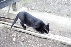 Today's Cat@2020ー03ー04