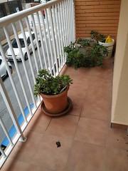 Terraza soleada. Infórmese sin compromiso en su agencia inmobiliaria Asegil. www.inmobiliariabenidorm.com