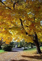 """Cincinnati - Spring Grove Cemetery & Arboretum """"Under Autumn's Cover"""""""