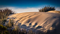 Sand Dune at the Beach at Moss Landing