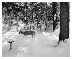 Pennsylvania Winter Before Global Warming