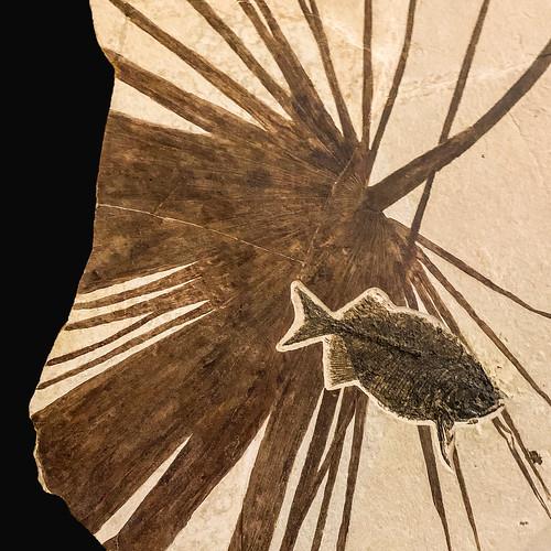 Eocene Art
