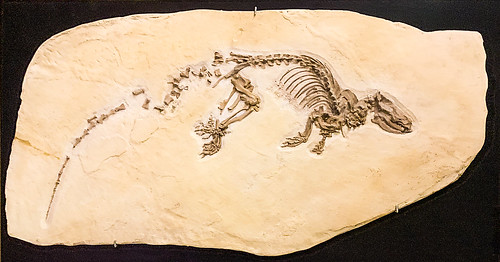 Eocene Mammal