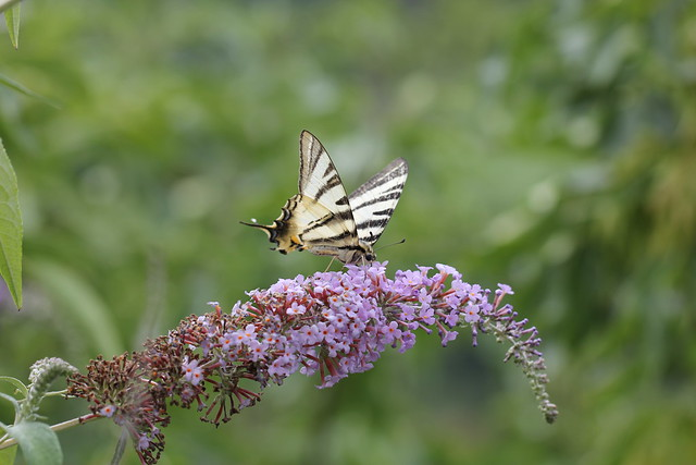 Photo:img_4196 By helicodiscus
