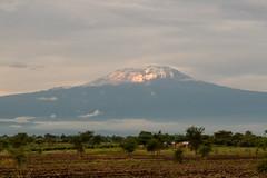 Mt Kilimanjaro With Sunset Light