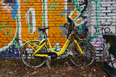 OFO bike fished out from the canal @ Parco ex OM @ Milan