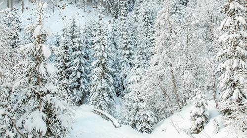 Sneeuwlanschap Flachau