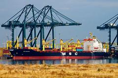 Argentinean shipyards