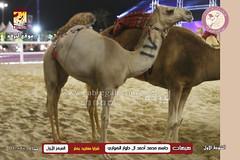 صور مهرجان مزاين نخبة الأصايل الأول مساء ٦-٣-٢٠٢٠