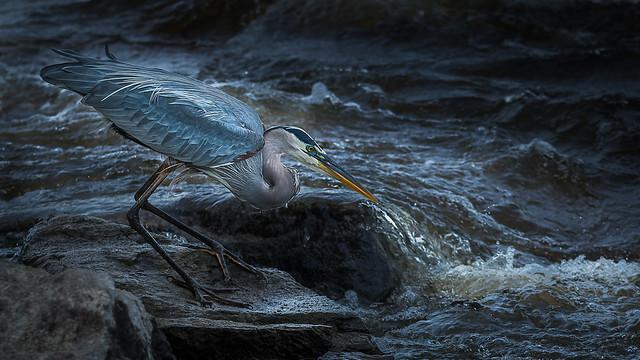 Prêt pour le poisson