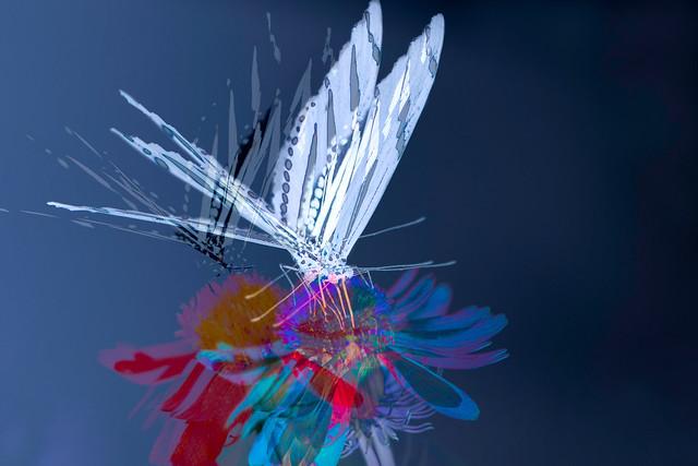 Le papillon enchanté