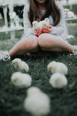 Little girl holding a group of baby chicks and sitting on grass.