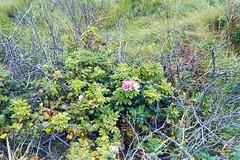 Cape Cod Flora