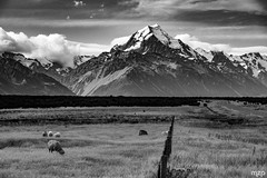 Mount Cook.