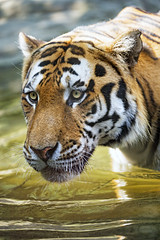 Another one of Sayan in the water