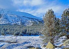 Frost on Tuolumne Meadow, Yosemite 5-15