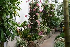 Orchids exhibition 2020, Botanical Garden Kosice, Slovakia