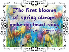 The First Blooms of Spring...
